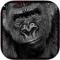 Ultimate Gorilla Animal Hunting Sim