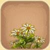 迷你世界小白菊