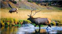 黄石公园:此生必去的绝美之地