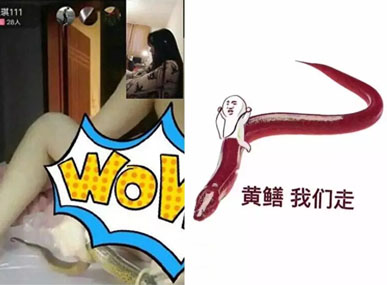 黄鳝门直播平台千余名女主播涉黄,73家直播平台违规被关停!