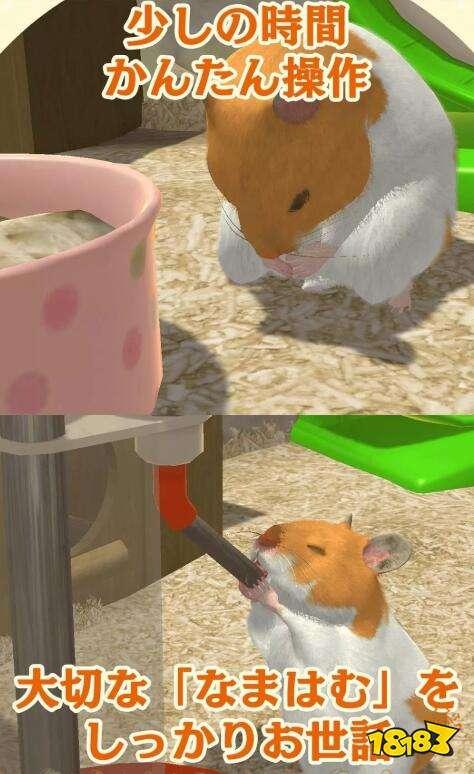 体验养宠物的乐趣!手游《与仓鼠生活》现已推出