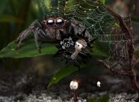 身體微小夢想龐大 這是一場螞蟻視角的宏觀世界大冒險!