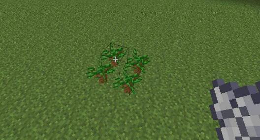 我的世界,我的世界树苗,我的世界树苗怎么获得