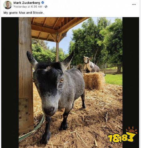 """Facebook创始人扎克伯格将宠物羊取名为""""比特币"""""""