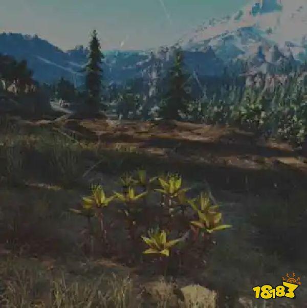 往日不再景天草药草收集点与地图示意